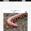 巨大ムカデとの遭遇 in タイランド | Monsters Pro Shop