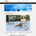 原発事故から10年、飯舘村のたくましい野生   ナショナルジオグラフィック日本版サイト
