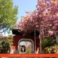 石峰寺 - 京都伏見 黄檗宗百丈山 五百羅漢のサイトサムネイル画像