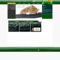 ホームページ制作/ウェブシステム開発
