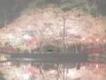 茂原市の観光名所 太平洋に近く、温暖で自然いっぱいの千葉県茂原市。 日本桜の名所100選にも選ばれた茂原公園の「桜まつり」や、関東屈指の「七夕まつり」は圧巻で見逃せません。 ほかにも茂原には観光スポットやレジャー施設、史跡などがたくさんあります。ビジネス、そして旅の目的にあった様々な宿泊施設もございます。 ぜひ一度おいでください。