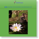 出張リラク専門 【Vaidurya / ヴァイドゥーリャ】 指圧・タイ古式・アロマオイル・リンパドレナージュのサムネイル