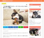 【犬の遊び道具】ウッディー・タフ・スティックという木の棒でストレス解消 | 豆柴ひめのお留守番生活