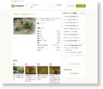 白菜とツナの豆乳みそスープ by あっこりんママ [クックパッド] 簡単おいしいみんなのレシピが159万品
