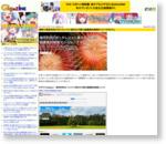 無料で商用利用できてクレジット表示も不要の画像素材検索サイト「タダピク」 - GIGAZINE
