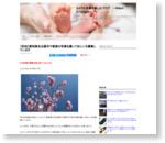【告知】愛知県名古屋市で家族の写真を撮ってほしい方募集しています : Dfで写真のプロを目指すブログ