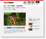 49度の灼熱インドを歩いて横断した男に襲いかかった人喰いトラ騒動
