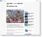 福岡で桜満開 ソメイヨシノ満開は全国トップ 開花と同様、最も早い記録