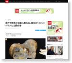 南アで発見の初期人類化石、進化の「ミッシングリンク」と研究者