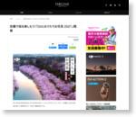 空撮で桜を楽しもう!「DJIとおうちでお花見 2021」開催