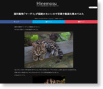 猫科動物「マーゲイ」が超絶に可愛い | Hinemosu