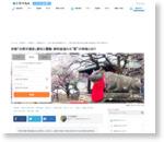 京都「北野天満宮」歴史と霊験、御利益溢れる