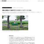 ポケモンGOをフィールドワークしてみた:連載「21世紀の民俗学」(8)|WIRED.jp