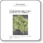 http://blog.houougoya.jp/?eid=1214427