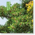 鳴尾浜臨海公園 – 西宮市の鳴尾浜臨海公園