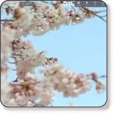 「福島の旅」