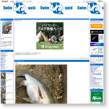 swim squidのサイトイメージ