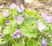 南会津の旅と観光