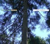 樹の上の冒険王国ターザニア