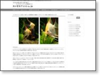 エンゼル専門サイト エンゼルフィッシュ.jp