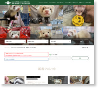 http://www.ferret-world.jp/