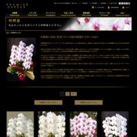 >>胡蝶蘭を選ぶ