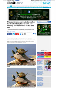 http://www.dailymail.co.uk/news/article-2520295/The-adorable-moment-turtle-mother-teaches-baby-swim--showing-motions-dry-land-first.html