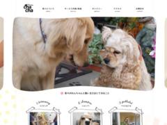 http://dogsalon-chacha.com