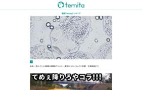Temitaの媒体資料