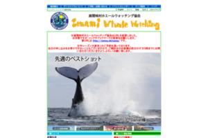 座間味村ホエールウォッチング協会 沖縄・慶良間でザトウクジラを見るツアー