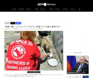 「健康で賢い」チェルノブイリの子犬、保護されて米国の里親の元へ 写真10枚 国際ニュース:AFPBB News