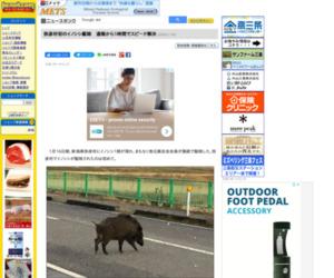 弥彦村初のイノシシ駆除 通報から1時間でスピード解決