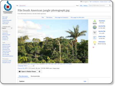 https://commons.wikimedia.org/wiki/File:South_American_jungle_photograph.jpg