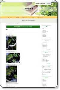 癒し | 花屋ブログ | 鹿児島県鹿児島市の花屋 まからず屋|花キューピットタウン