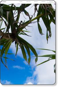 沖縄ホームページ制作SEO対策はサンネット株式会社