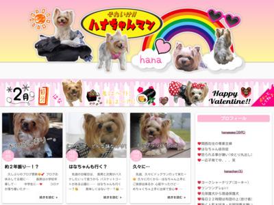 【ヨーキー】元保護犬ヨークシャーテリアの愛犬ブログ