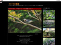ibuhato・イブハトの窓庭