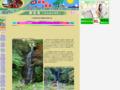 観音滝(大分県日田市)・写真満載九州観光