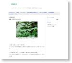 山菜 ミズ(ウワバミソウ) - 生活の方法