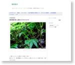 採取時期が長い山菜のミズ(ウワバミソウ) - 生活の方法